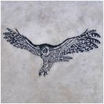 Barn owl hunting Engraving